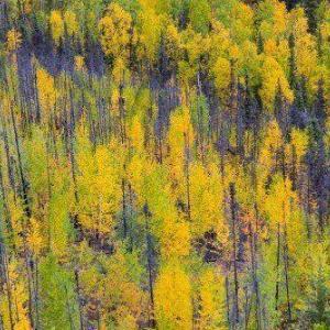 Autumn trees naturbilder tryckt på glas - av felix oppenheim   Art On The Wall