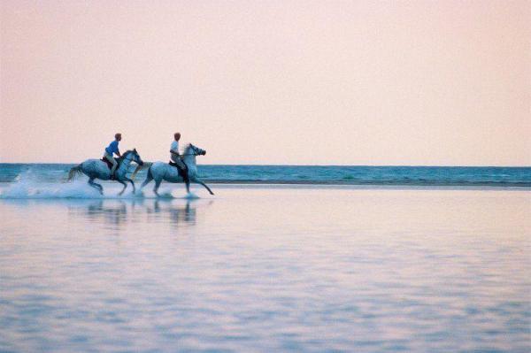 galloping on beach sommarbilder tryckt på glas | felix oppenheim