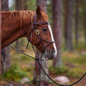 Köpa häst bilder online- av felix oppenheim   Art On The Wall