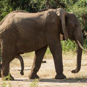 Köpa elefant djur bilder på nätet - av felix oppenheim   Art On The Wall