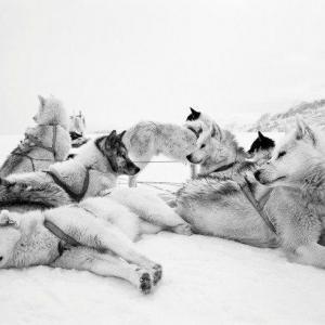 Vilande hund djursbilder tryckta på glas - av felix oppenheim | Art On The Wall